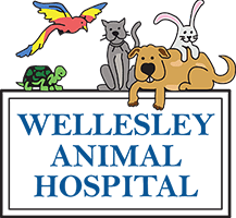 Wellesley Animal Hospital